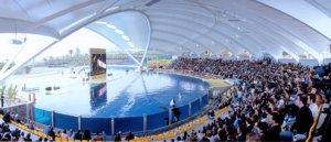 loro-parque-orcas-pool