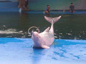 thailand-pattaya-pink-dolphin