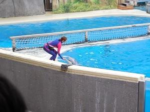 dolphinbay-food1