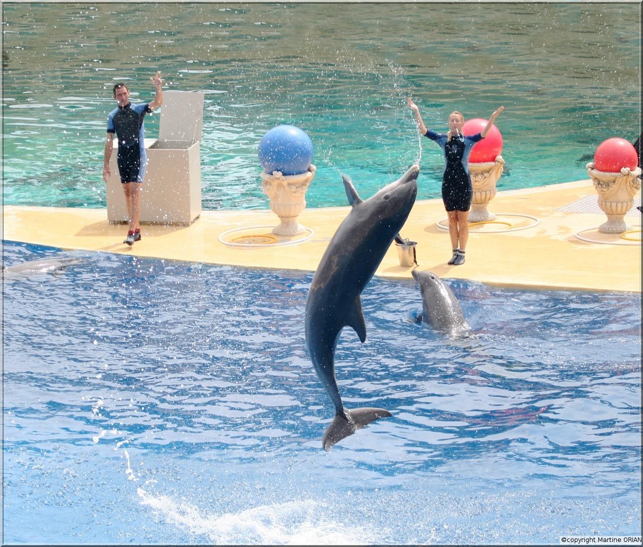 france les rencontre agee dauphins femme rencontre avec  Nous sommes loin des clichés cibler votre recherche grâce à.